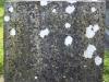rosenallis-graveyard-186