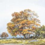 Autumn, Co. Sligo by Frank Egginton