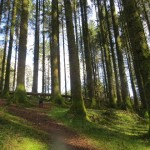 Sliabh Bloom Walk