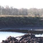 Bog and Turf